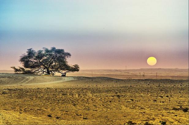 Tree of life, μπαχρέιν